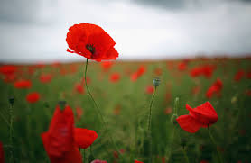 editorial lest we forget quesnel cariboo observer