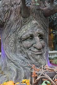 tree face tree face tree face free stock photos in jpeg jpg 2848x4272