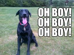 Happy Dog Meme - a happy dog memes quickmeme