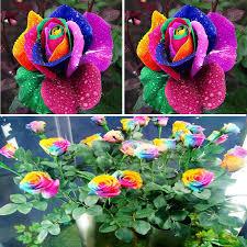 multi colored roses aliexpress buy new beautiful 500pcs rainbow