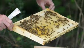 tennessee wildlife federation how to bee