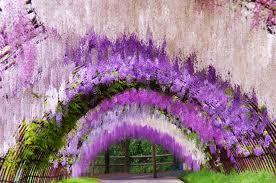 japan flower tunnel a colorful walk wisteria tunnel at kawachi fuji gardens japan