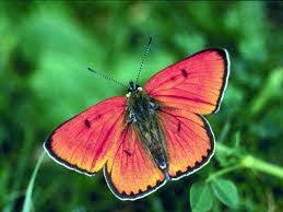 butterfly symbolism the symbolic meaning of the butterfly