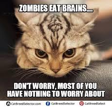 Angry Cat Meme - angry cat memes cat breed selector