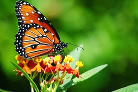 acclaim butterflies butterfly symbolism and the meaning of