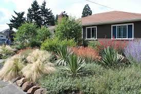 drought tolerant garden design gorgeous design drought tolerant