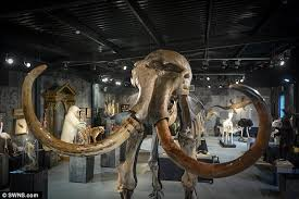 skeleton monty ice age woolly mammoth bought auction