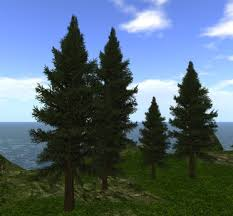 second marketplace 5 pine trees cluster forest mountain