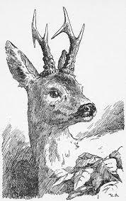 bambi character