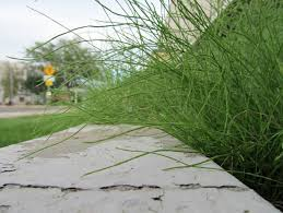 escape of the invasives top six invasive plant species in the urban weeds u2013 awkward botany