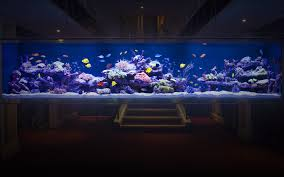 designer fish tank aquarium architecture
