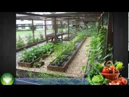 container garden vegetables for beginners vegetable gardening in