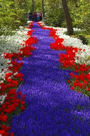 Nice Flower Picture - beautiful red and blue river of flowers flores y plantas