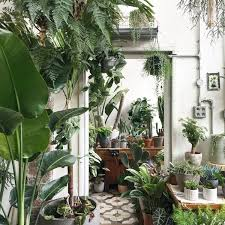 why indoor plants are a must for interior lovers london evening