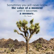 best 35 tree quotes and motivational thoughts with pictures