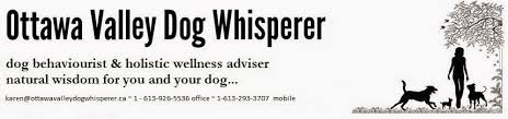 boxer dog gum problems ottawa valley dog whisperer dental care for dogs and cats