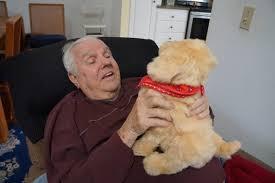 Comfort Golden Retriever Breeders Solution To Emotional Support Animal Debate Comfort Golden Retriever