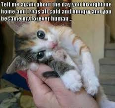 Cute Kitty Memes - adorable cat memes image memes at relatably com meowing galore