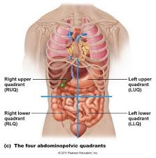 anatomy lower left abdomen female anatomy lower left abdomen