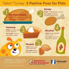the top 5 best blogs on thanksgiving safety for dogs