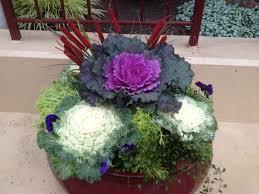 36 best winter flower pots images on pinterest gardening potted