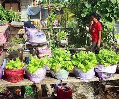 philippines u2014 city farmer news