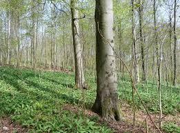 Samtgemeinde Bad Grund Naturparkplan Harz Niedersachsen Pdf