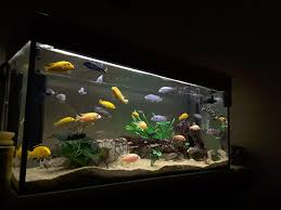 tips for aquarium filter media order
