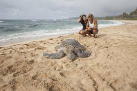 top 10 things to do in oahu north shore of oahu turtle bay resort