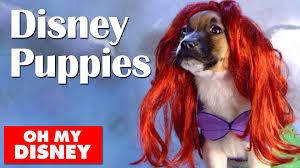 Disney Halloween Costumes Dogs Adorable Disney Puppies Slow Motion Disney