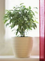home interior plants the easiest indoor house plants that won t die on you today
