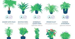 infographic top 18 houseplants for purifying the air you breathe