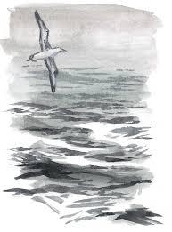 how to draw water open ocean john muir laws
