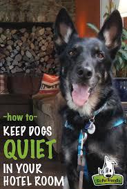 93 best jet set pets images on pinterest dog travel your pet