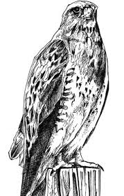 miles park bird project