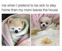 Sick Puppy Meme - blep album on imgur