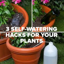 keep your plants happy and hydrated with these 3 self watering hacks