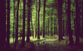 wallpaper tumblr forest tumblr background forest 10 background check all