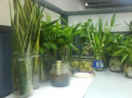 creative e simple indoor plant decor for home office with clear creative e simple indoor plant decor for home office with clear glass jar for pots e