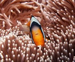diving in zanzibar marine life picture video u2013 one ocean u2013 padi 5 star