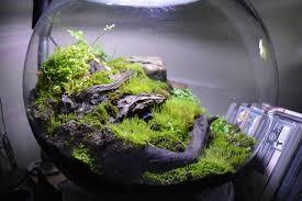 terrarium garden kit 6 live plants live moss soil just add