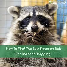 the 5 best raccoon baits reviews u0026 ratings oct 2017