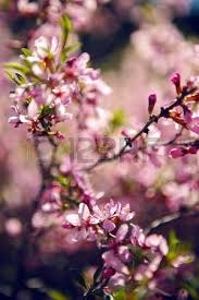 almond images stock pictures royalty free almond