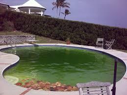 my swimming pool is green how to clean u0026 get rid of algae dengarden