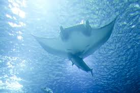 free picture ocean underwater fish
