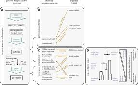 Genome Mapping Are We There Yet Reliably Estimating The Completeness Of Plant