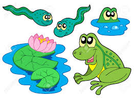 frog and tadpole clipart clipartxtras