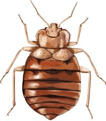 Common Bathroom Bugs Effective Home Remedies For Bed Bugs Full Guide