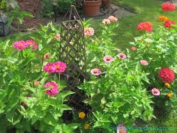 Zinnias Flowers 5 Easy Annuals To Grow From Seed