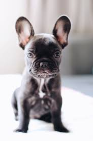 best 25 really cute dogs ideas on pinterest dogs and puppies